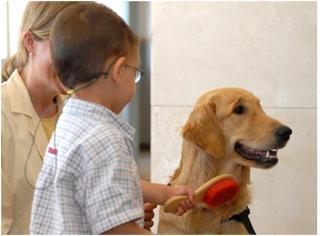 Niño peinando a un perro