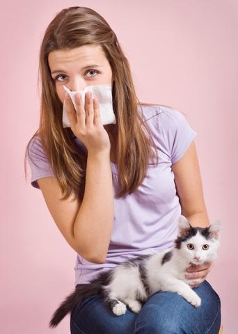 que se puede tomar para la alergia a los gatos