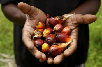 Que alimentos contienen el aceite de palma