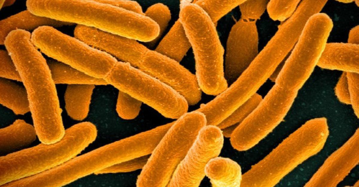 e coli carne síntomas de diabetes